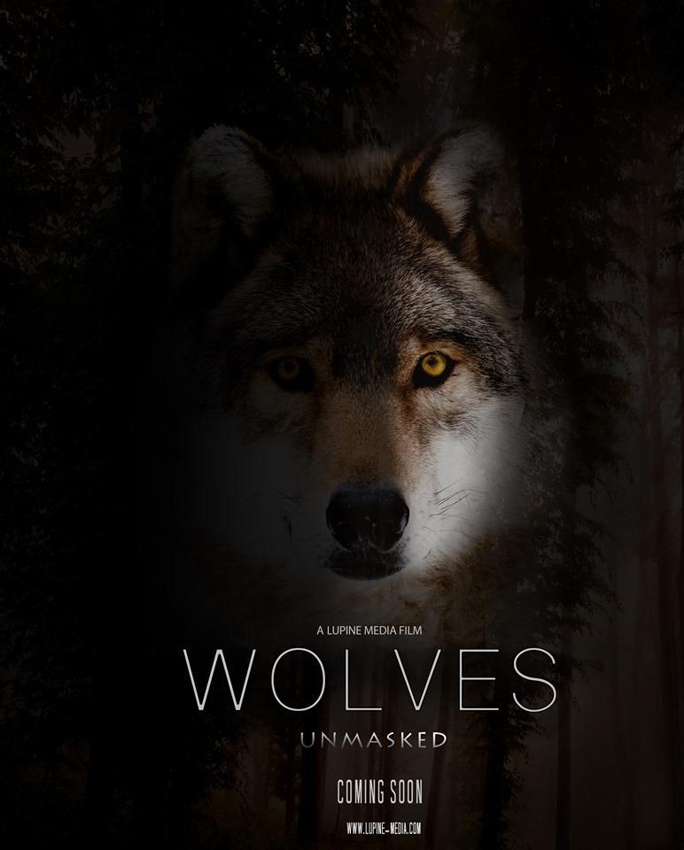 Wolves Unmasked update