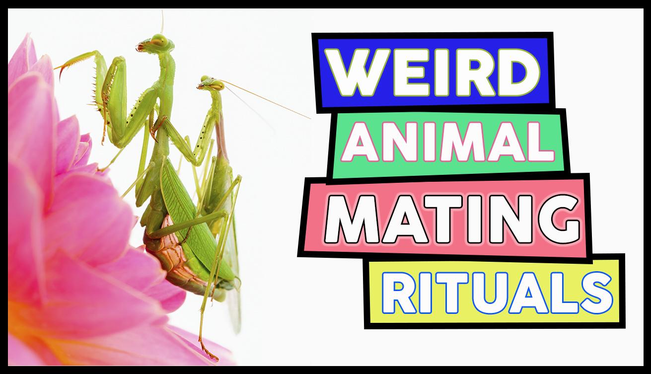Weird Animal Mating Rituals