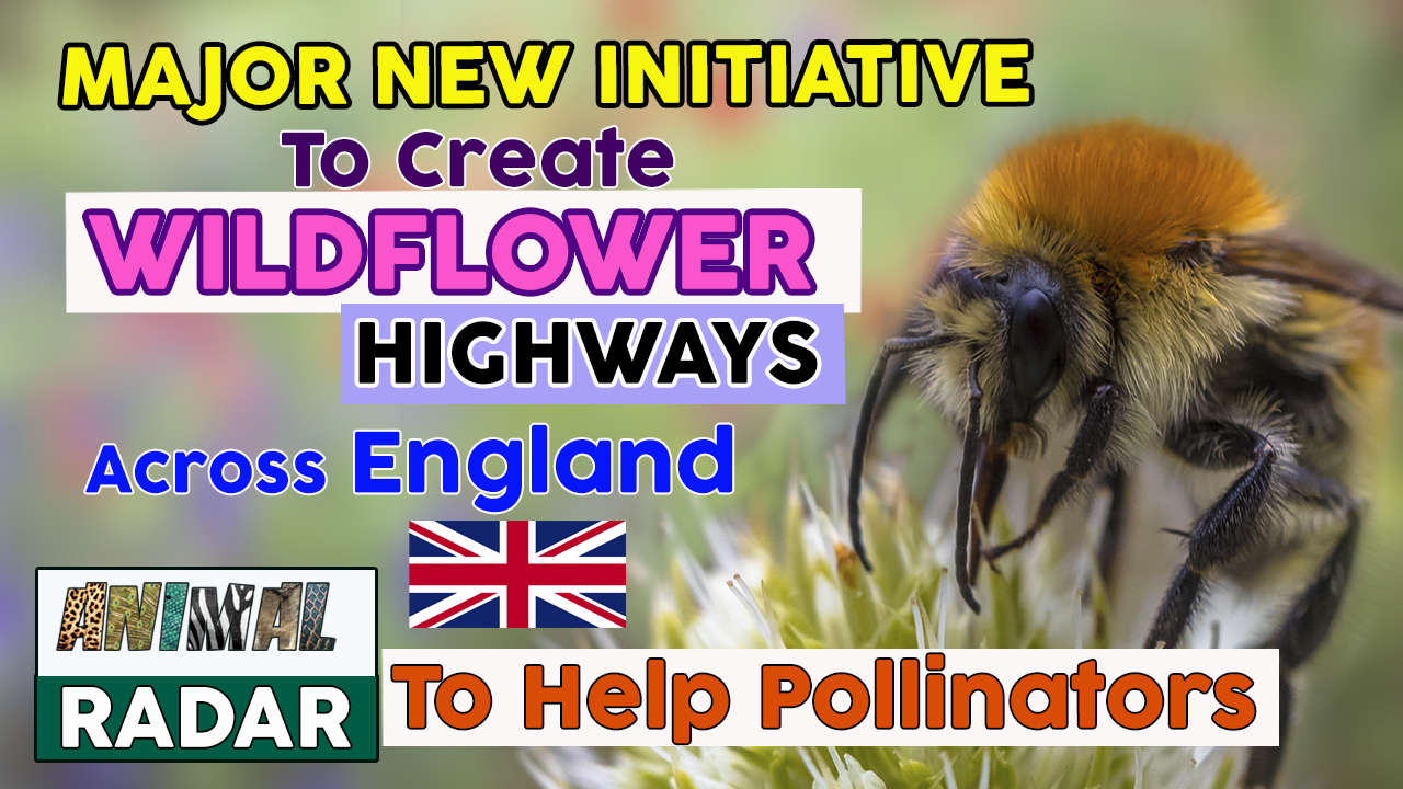 B-line Initiative to Create Wildflower Highways Across England to Help Pollinators 🌸🐝