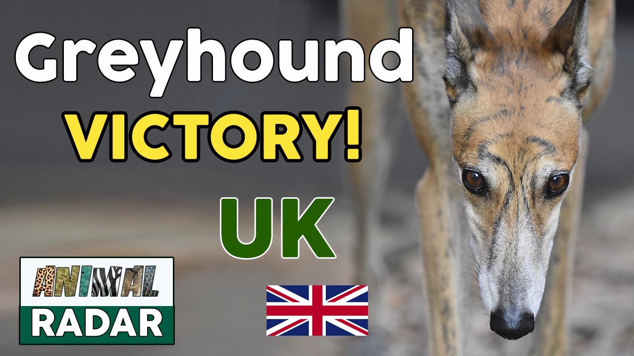 Greyhound Victory as Belle Vue Stadium Announces Closure 👉 End Greyhound Racing!