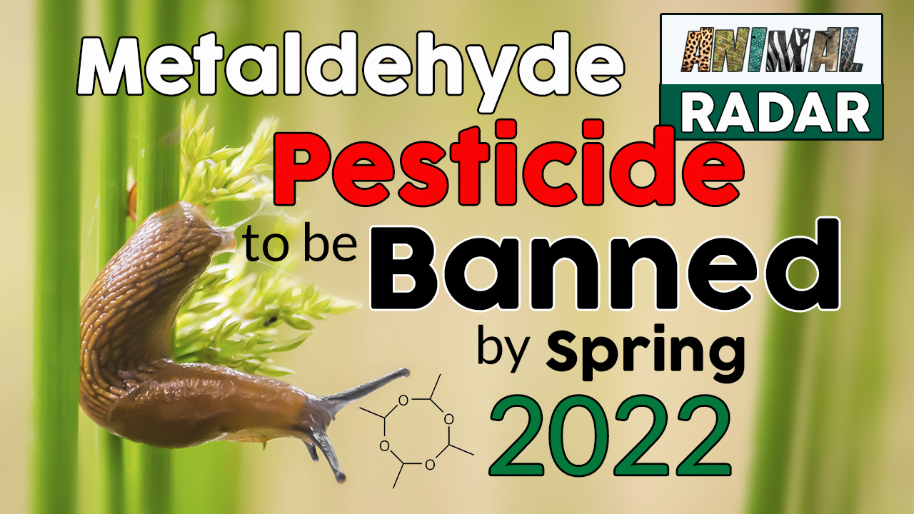 Metaldehyde Pesticide to be Banned by Spring 2022