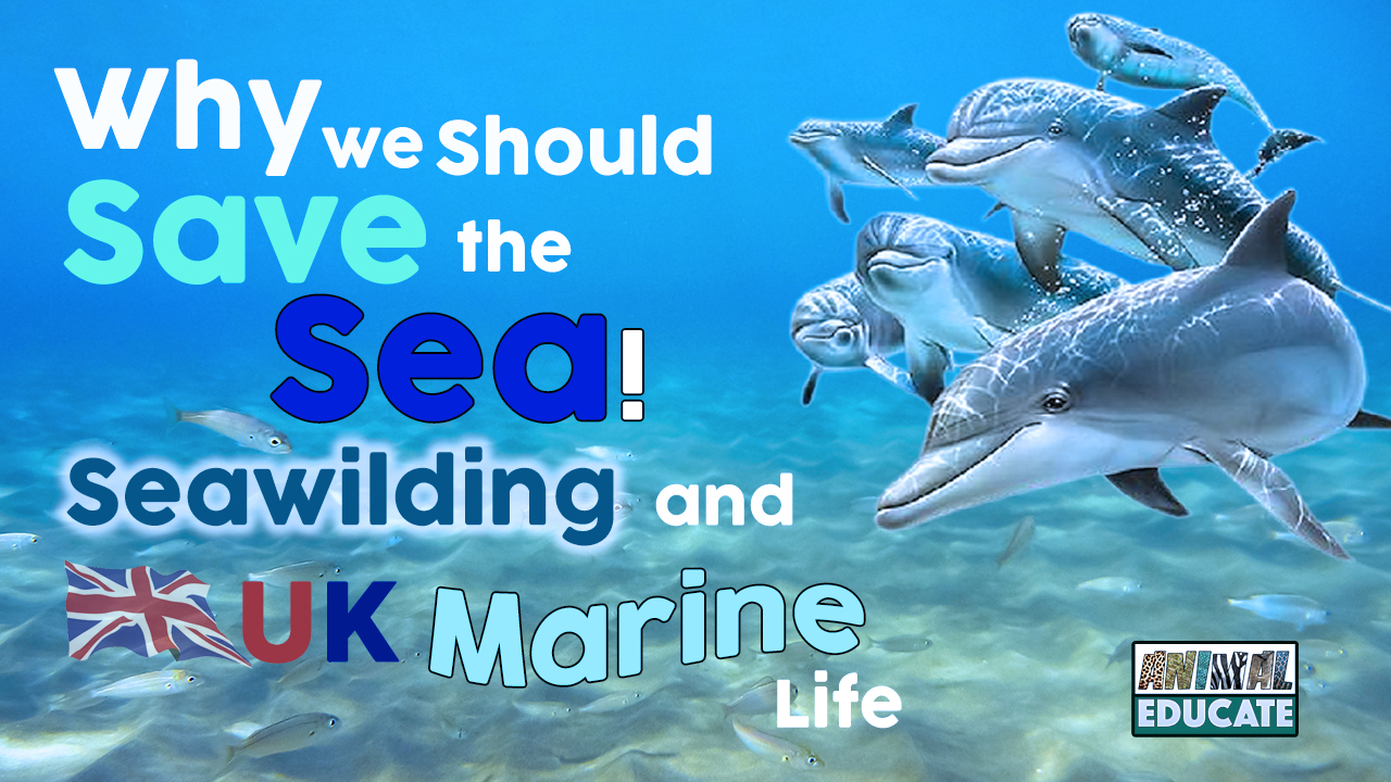 Why We Should Save The Sea – Seawilding and UK Marine Life