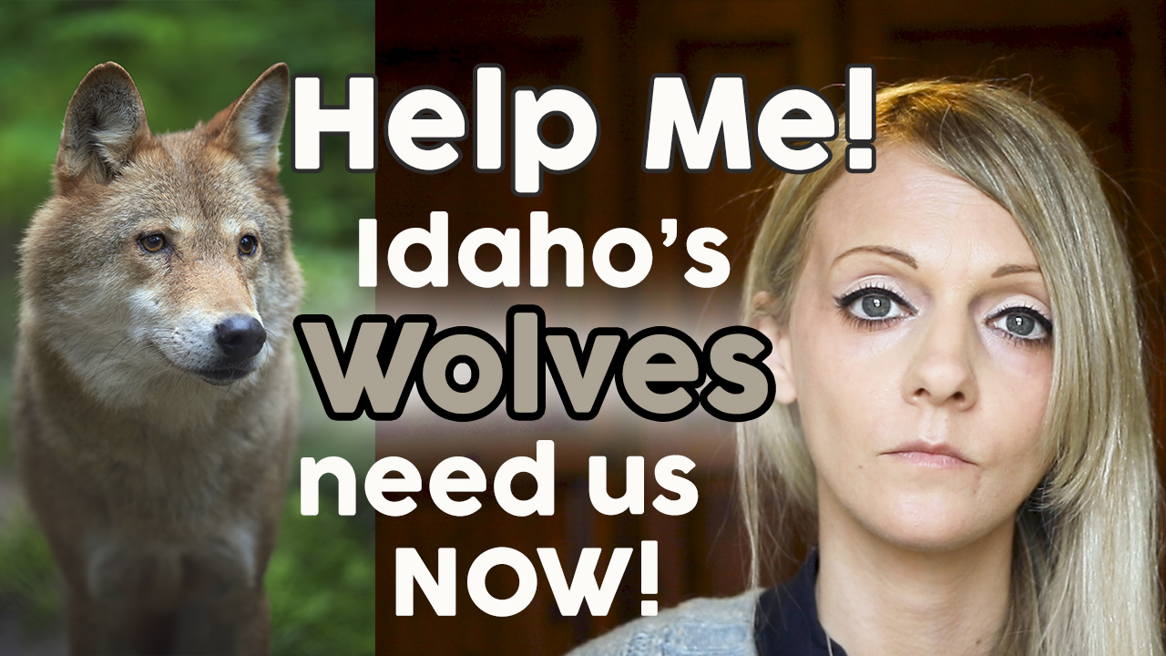 Idaho's Wolf Slaughter! HELP ME