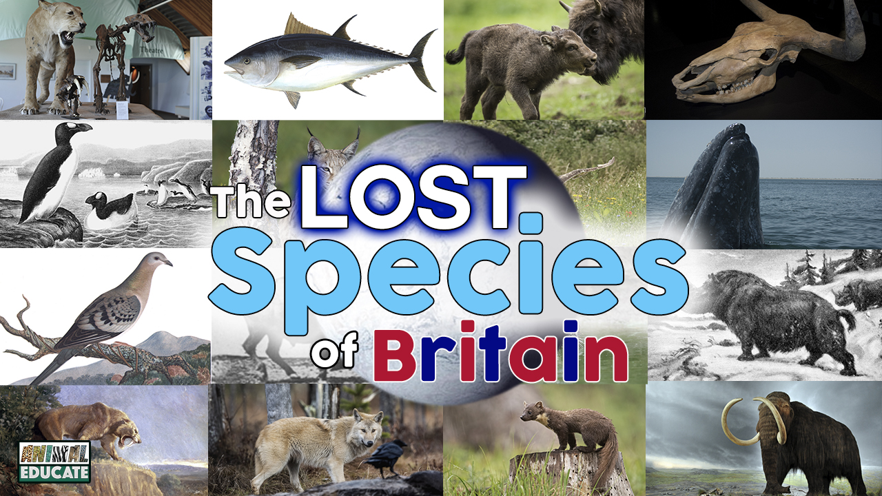 The Lost Species Of Britain